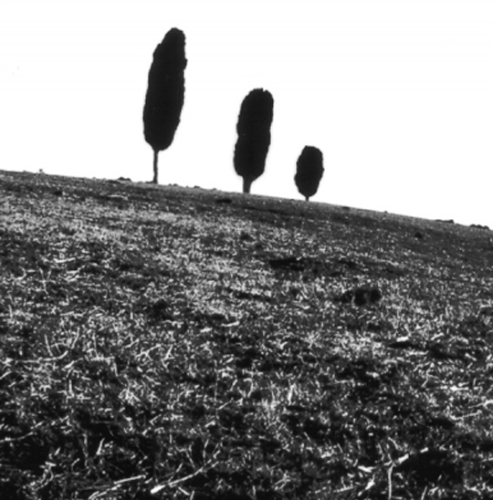 Wishing Trees pinhole image