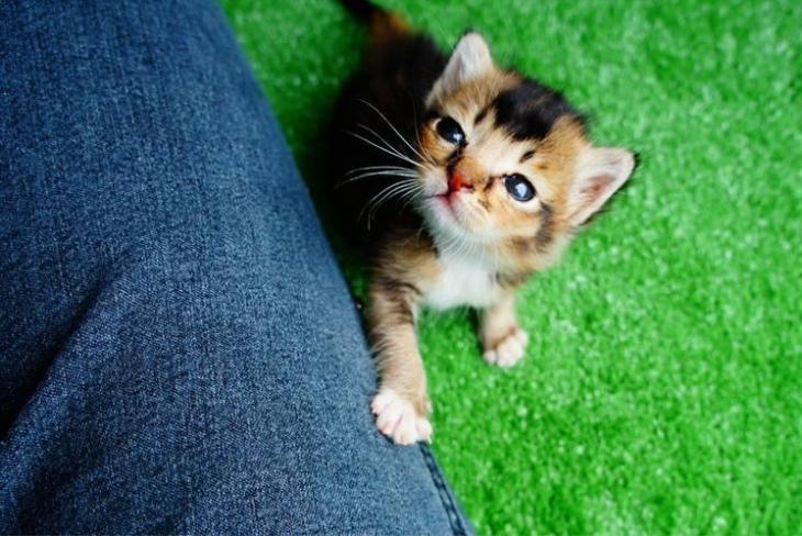 killer kitty 10