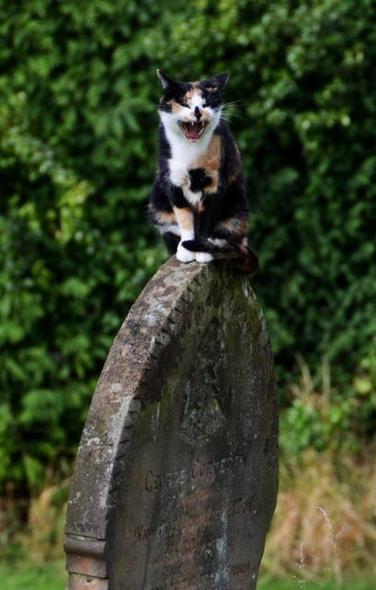 killer kitty 2