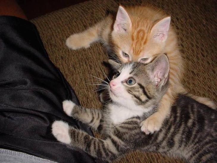 killer kitty 3