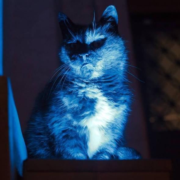 killer kitty 4