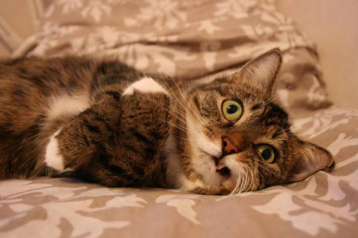 killer kitty 6