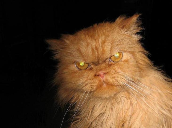 killer kitty 7