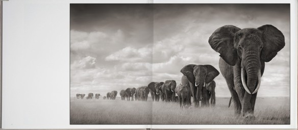 Nick Brandt – On This Earth, A Shadow Falls (inside 1)