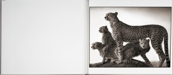 Nick Brandt – On This Earth, A Shadow Falls (inside 2)