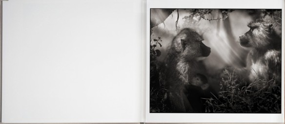 Nick Brandt – On This Earth, A Shadow Falls (inside 5)