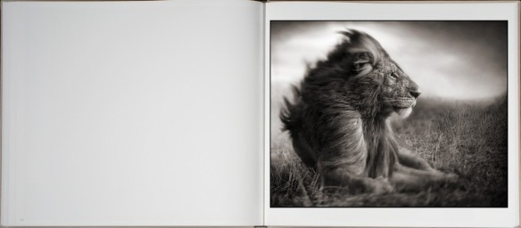 Nick Brandt – On This Earth, A Shadow Falls (inside 7)