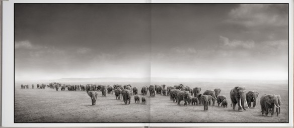 Nick Brandt – On This Earth, A Shadow Falls (inside 8)