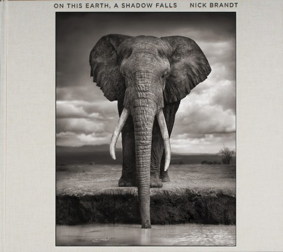 Nick Brandt – On This Earth, A Shadow Falls