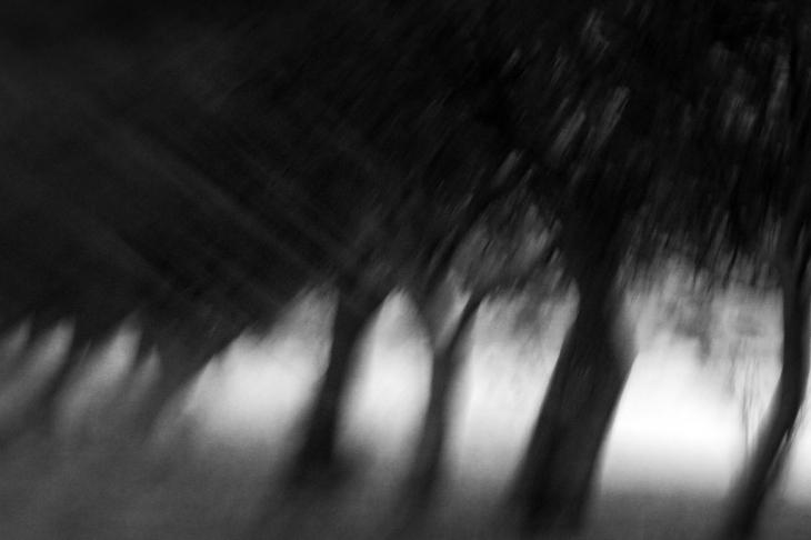 A Hallucination Of Salty Trees by Vangelis Bagiatis