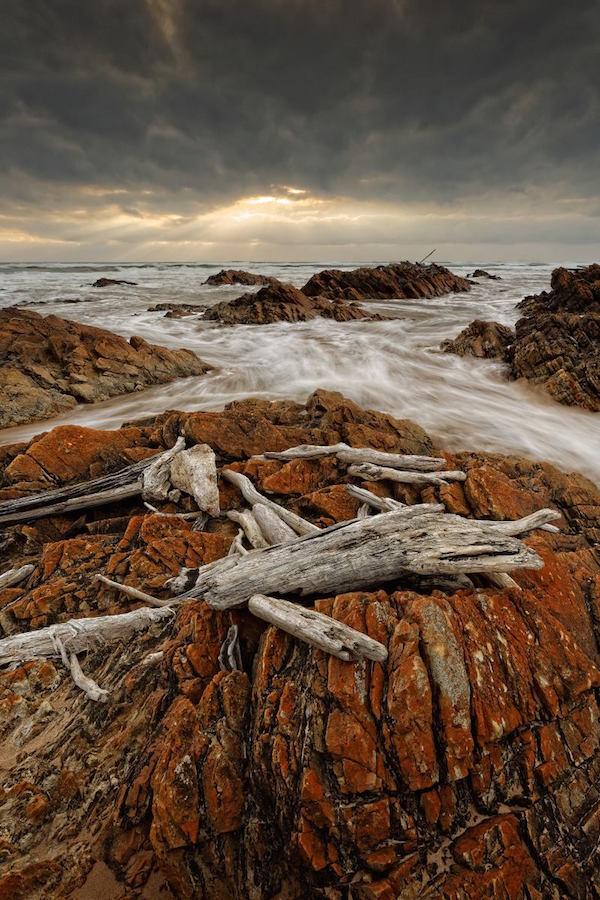 David Murphy's 'Bones', Tarkine, Tasmania